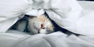 slapen vitaal vitaliteit duurzaam